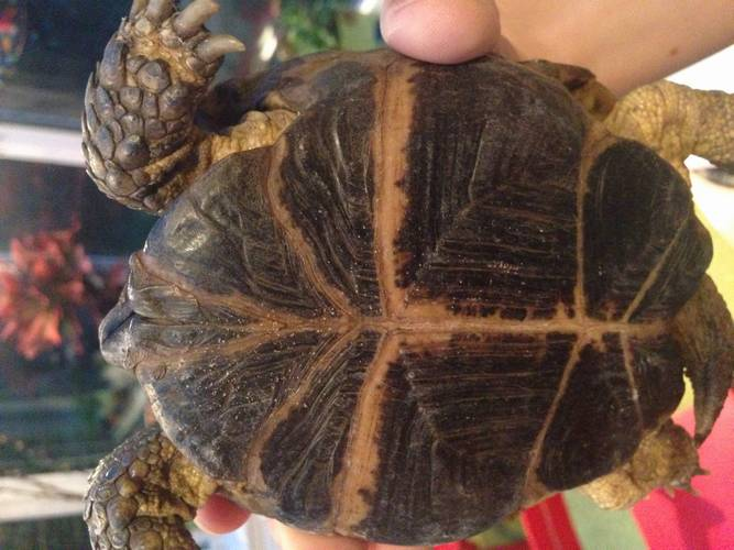 Tortoise Protection Group Members Forum - Tortoise