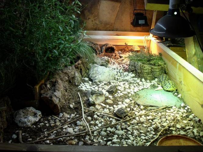 1000 ideas about tortoise enclosure on pinterest tortoise table - 1000 Images About Turtles On Pinterest Outdoor Tortoise